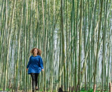 arashiyama bamboo forest kyoto japon portada