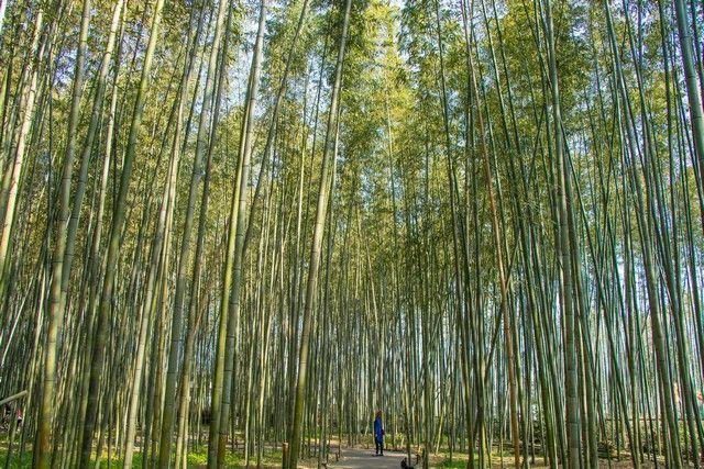 arashiyama y el norte de kioto japon (10)