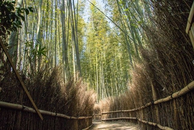 arashiyama y el norte de kioto japon (17)