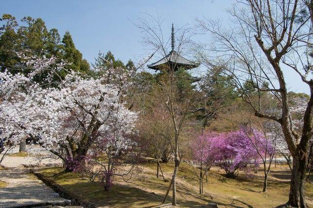 arashiyama y el norte de kioto japon (37)