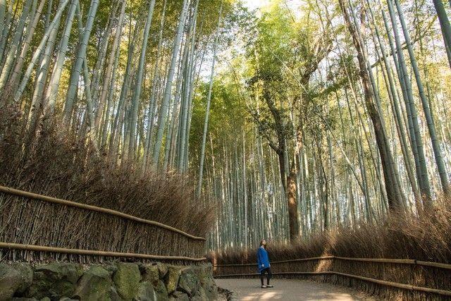 arashiyama y el norte de kioto japon (5)