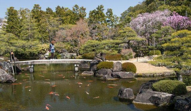 jardines kokoen himeji en hanami (1)