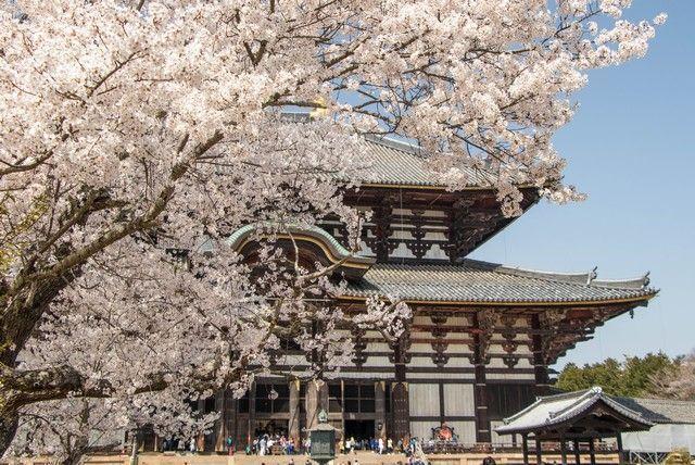 nara kioto en hanami (10)