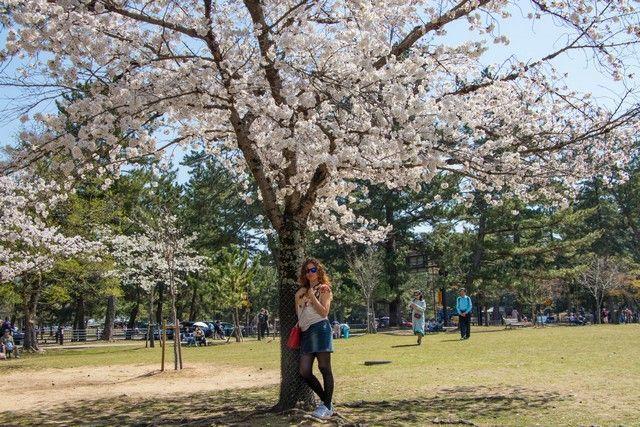 nara kioto en hanami (2)