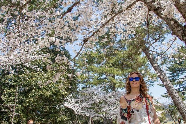 nara kioto en hanami (3)
