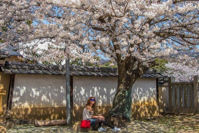 nara kioto en hanami (4)