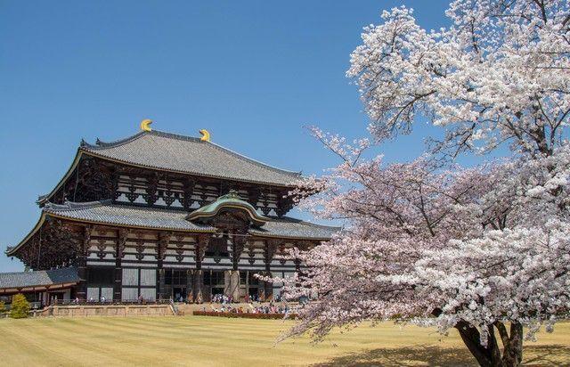 nara kioto en hanami (6)