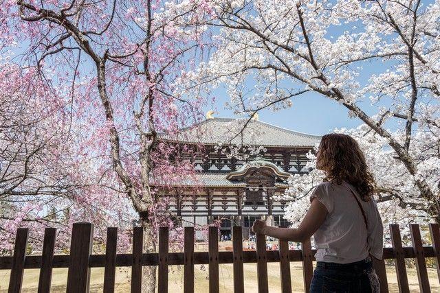 nara kioto en hanami (9)