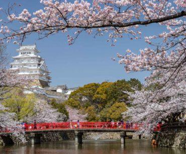 vistas del castillo de himeji hanami portada