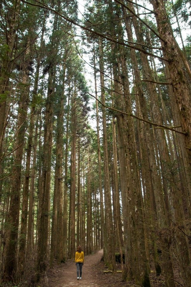 La ruta nakasendo de magome a tsumago japon (17)