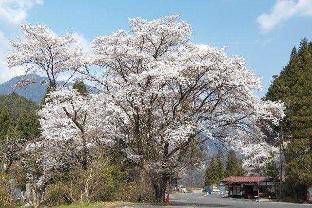 La ruta nakasendo de magome a tsumago japon (23)