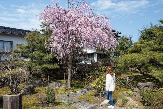kanazawa en un día japon en hanami (11)