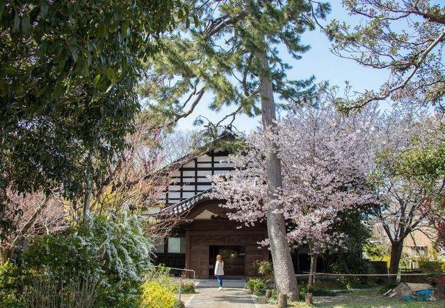 kanazawa en un día japon en hanami (21)