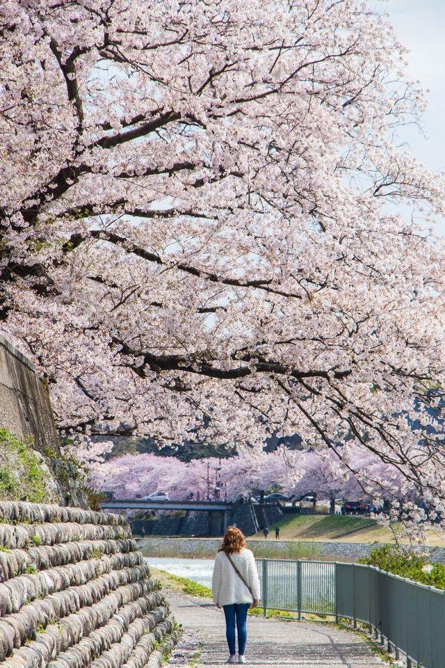 kanazawa en un día japon en hanami (25)