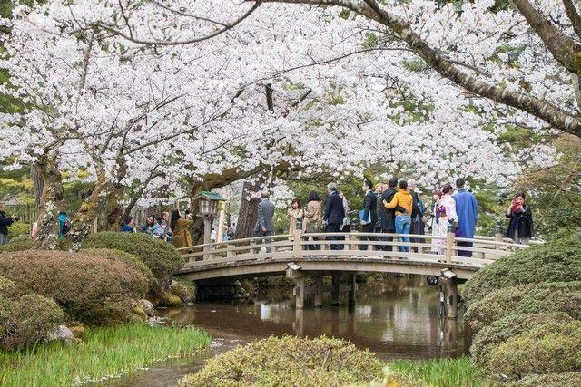 kanazawa en un día japon en hanami (36)