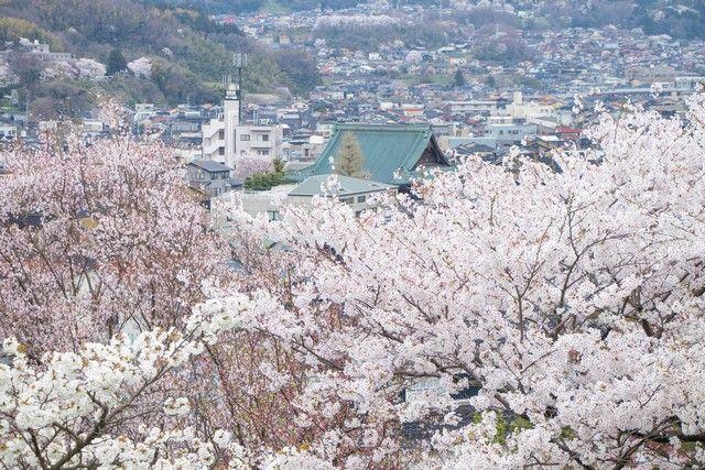 kanazawa en un día japon en hanami (40)