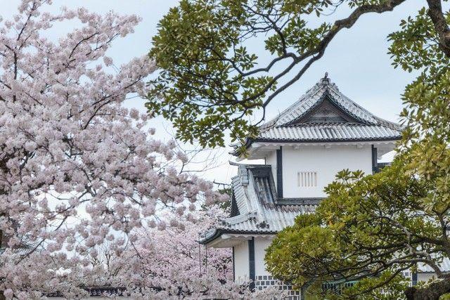 kanazawa en un día japon en hanami (42)