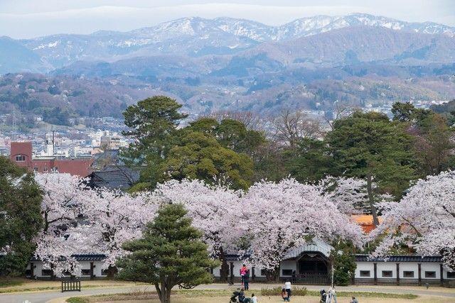 kanazawa en un día japon en hanami (48)
