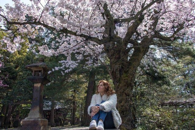 kanazawa en un día japon en hanami (6)