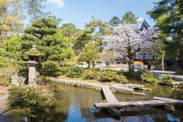 kanazawa en un día japon en hanami (7)