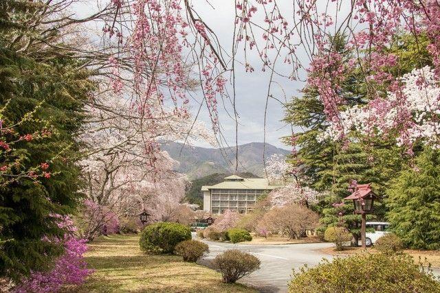 kawaguchiko monte fuji japon (3)