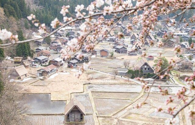 shirakawago en hanami japon alpes japoneses (6)