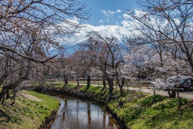 Oshino Hakka monte fuji kawaguchiko (1)