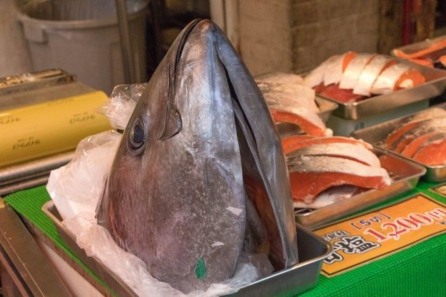 giza tokio mercado tsukiji (7)