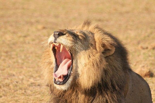 botswana y victoria falls en 14 días (8)