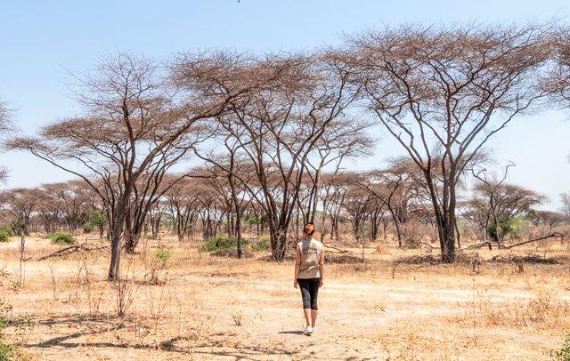 de kasane a savuti botswana (18)