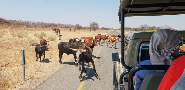 de kasane a savuti botswana (2)