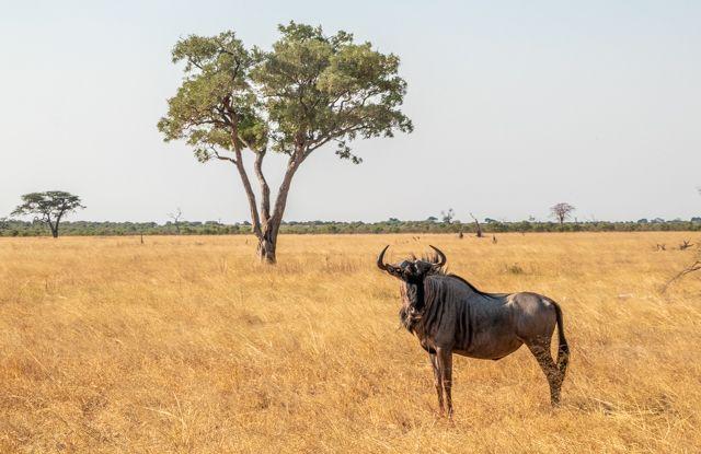 de kasane a savuti botswana (21)