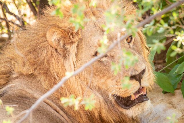 de kasane a savuti botswana (23)