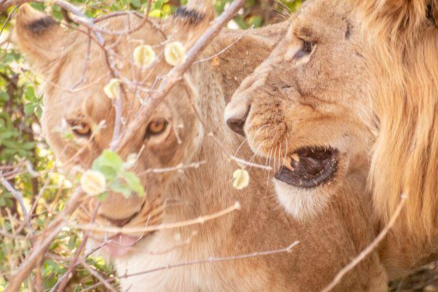 de kasane a savuti botswana (24)