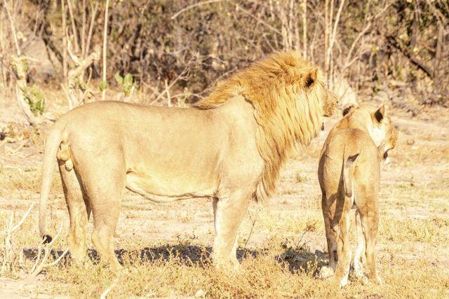 de kasane a savuti botswana (25)