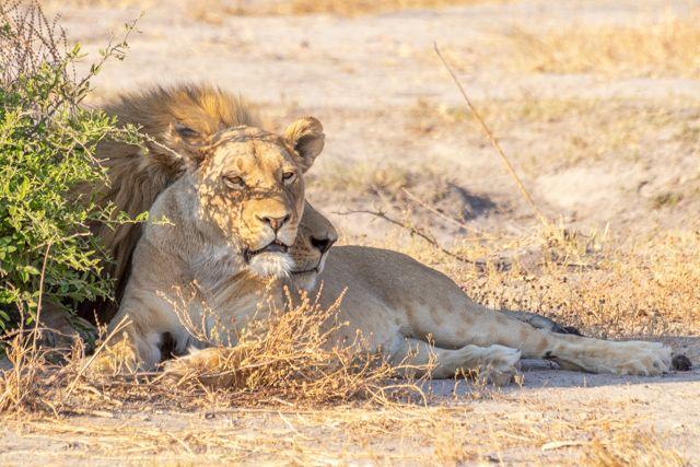 de kasane a savuti botswana (29)