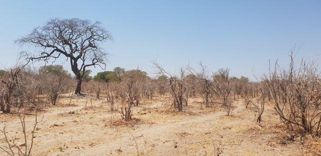 de kasane a savuti botswana (3)