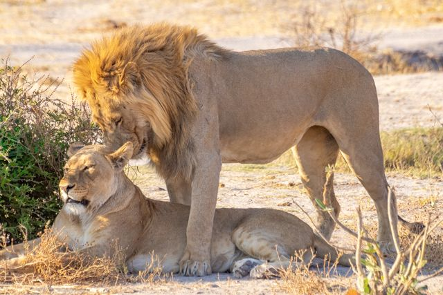 de kasane a savuti botswana (30)