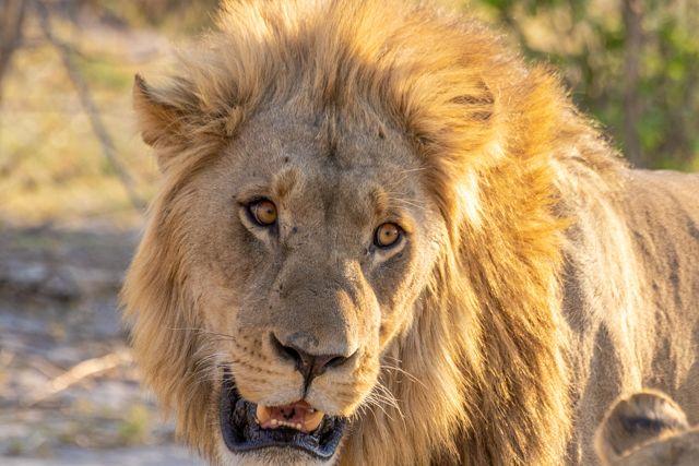 de kasane a savuti botswana (32)