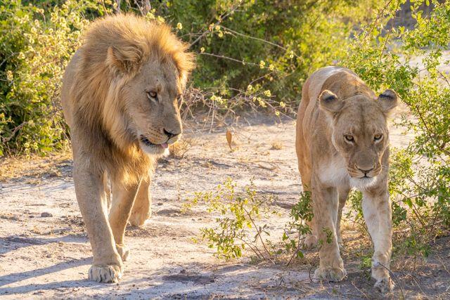 de kasane a savuti botswana (33)