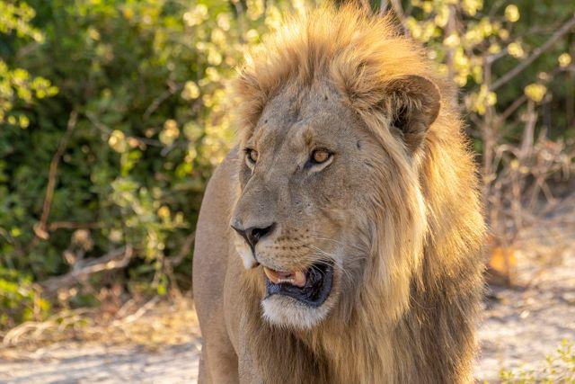de kasane a savuti botswana (34)