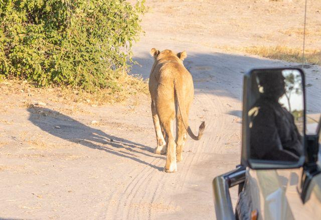 de kasane a savuti botswana (35)