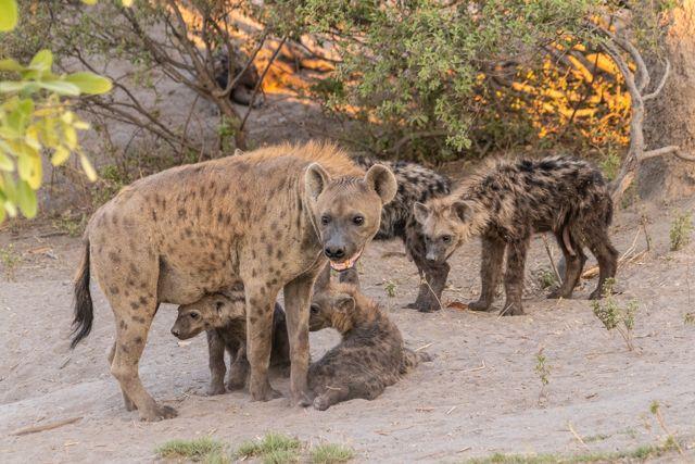 de kasane a savuti botswana (38)