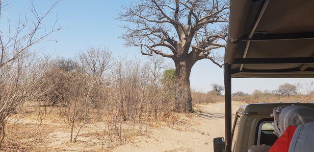 de kasane a savuti botswana (4)
