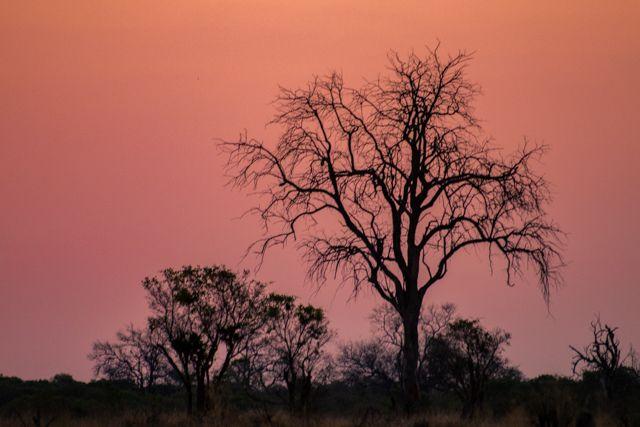 de kasane a savuti botswana (42)