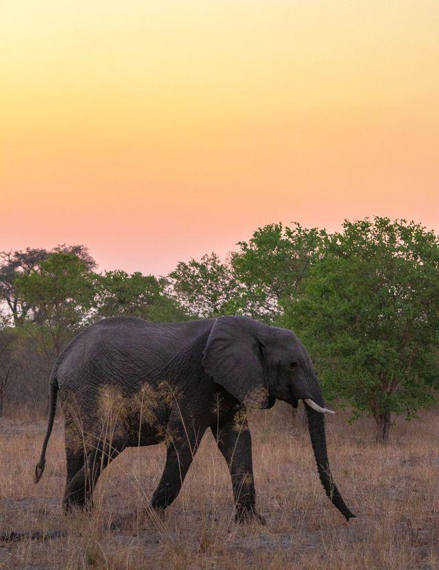 de kasane a savuti botswana (43)