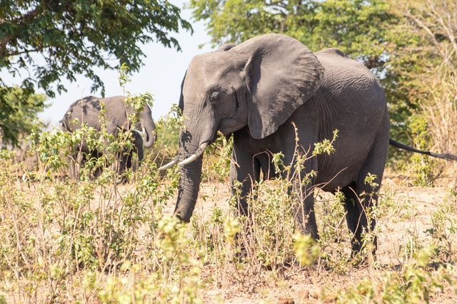 parque nacional chobe botswana (10)