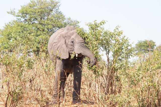 parque nacional chobe botswana (13)