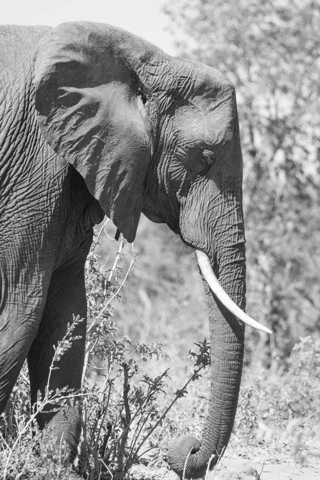 parque nacional chobe botswana (14)