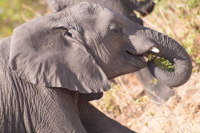 parque nacional chobe botswana (15)